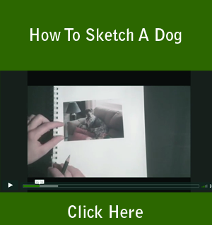How To Sketch A Dog